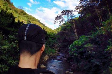 Amazon Jungle /// Vinjatek