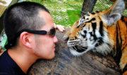 Selfie w/ a Tiger in Chiang Mai, Thailand /// Vinjatek