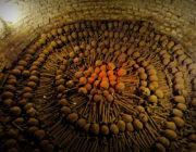 - Catacombs of Paris Bones Circle -