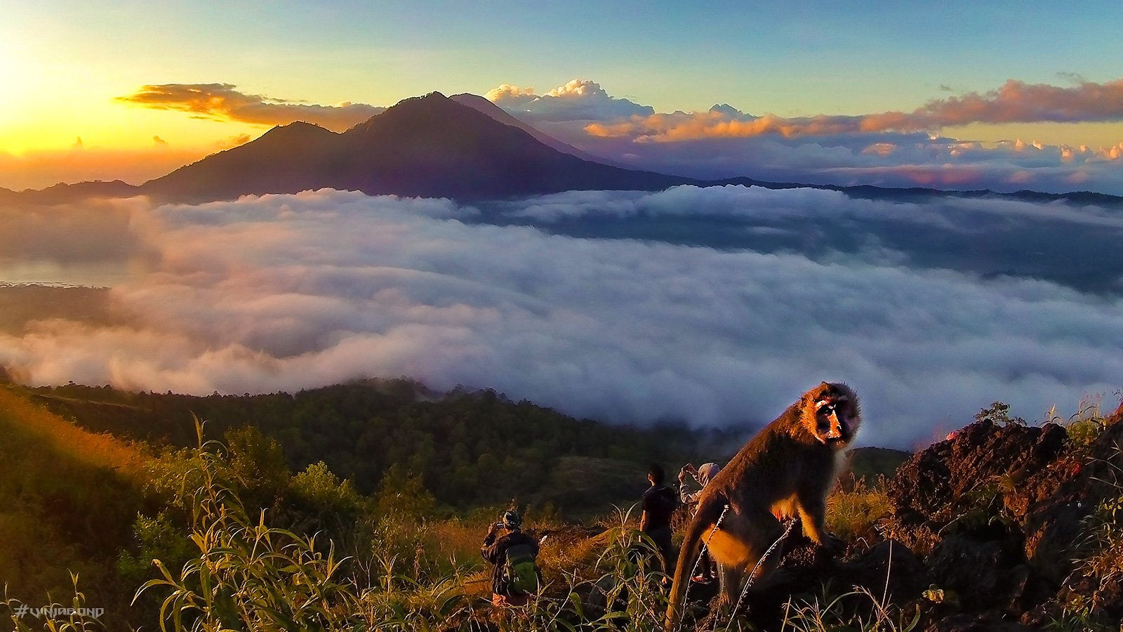 Curious Monkey on Mount Batur /// Vinjabond