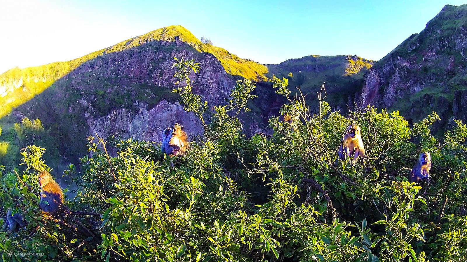 Monkeys at Mount Batur /// Vinjabond