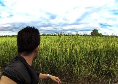 Rice Paddy in Vietnam /// Vinjatek