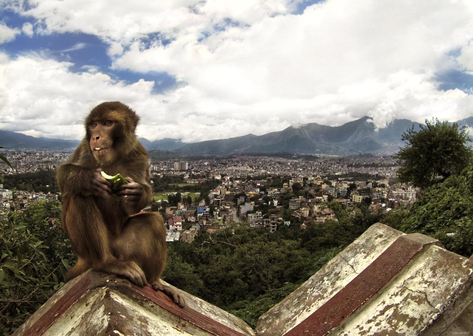 Swayambhunath Temple in Kathmandu, Nepal /// Vinjatek